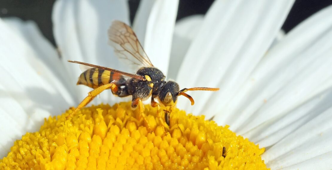 wasp-bee