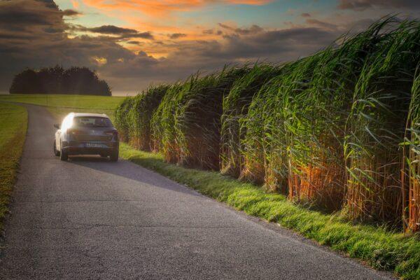 samochod i pole kukurydzy